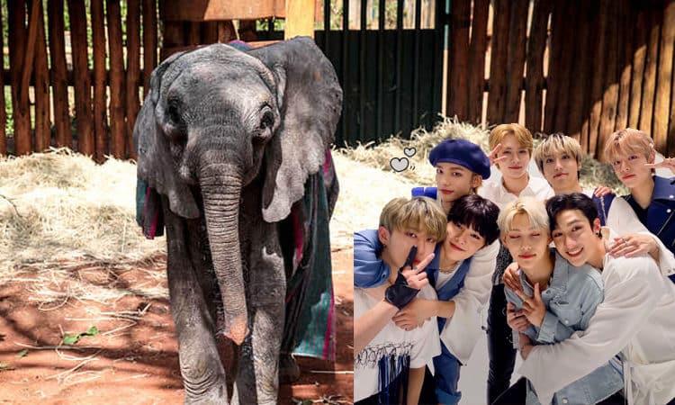 Fan base de Stary Kids en China adopta un elefante por el 3 aniversario del grupo